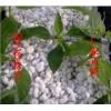 生产与销售园艺珍珠岩 营养栽培基质 松土透气 无土栽培